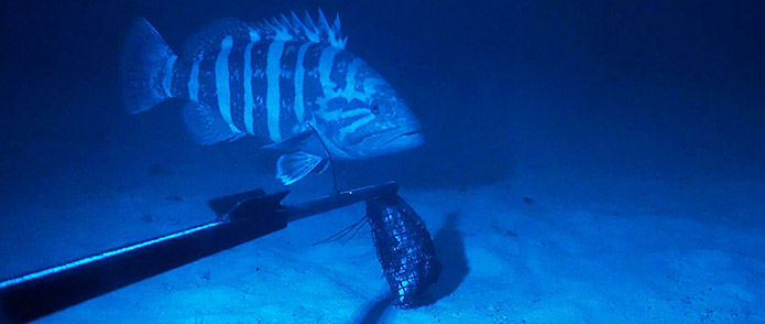 ​Rare finding about deepwater fish