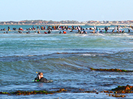 View from the beach of abalone fishers in wetsuits diving on a nearby reef