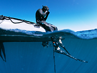 Diver sitting on the edge of a boat with shark shioeld devices dipping below the water