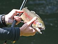 An angler holding a nice trout