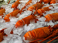 Processed western rock lobsters packed in ice