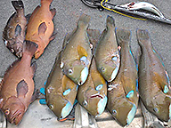 Ten fish laid out on a boat deck as part of Fisheries inspection