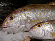 Two goldband snapper on ice