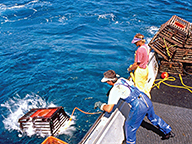 Commercial rock lobster fishers launch a lobster pot off the side of a boat