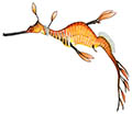 Weedy seadragon illustration