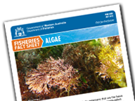 Algae Factsheet